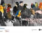Ptaszarnia z ulicy Teatralnej - wernisaż wystawy już w czwartek!
